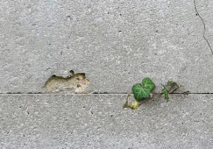 سنفورد ایکدا دیوار و گیاه